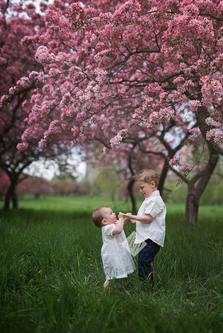 ottawa child photographer, ottawa family photographer, ottawa baby photographer, cherry blossoms