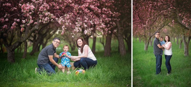 ottawa, family, cherry blossoms, boy, outdoor, photography, photographer
