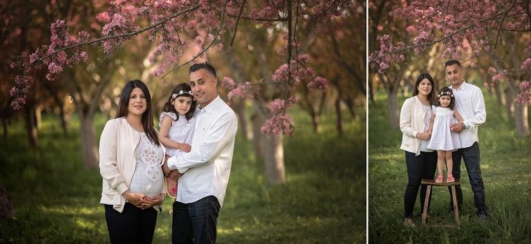 ottawa family photographers, ottawa maternity photographers, best family photographer in ottawa, cherry blossoms, spring photos